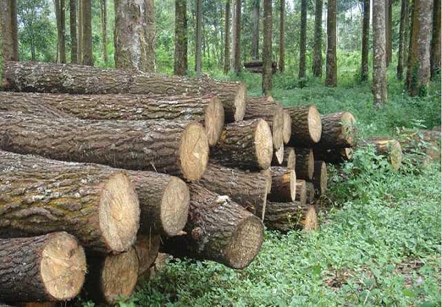 người ta thường chọn phần nào của gỗ để làm nhà làm trụ cầu tà vẹt tại sao